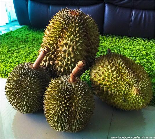 sugared durian reciepe (2)
