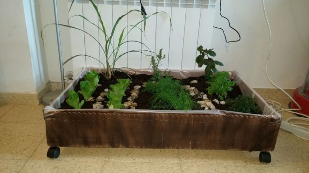 15 ideas diy terrarium water garden (15)