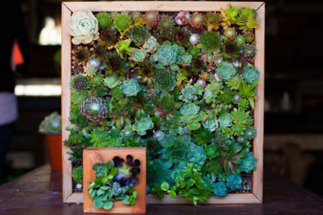 15 ideas diy terrarium water garden (7)