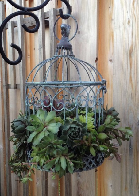 19 Ideas potted plants (10)