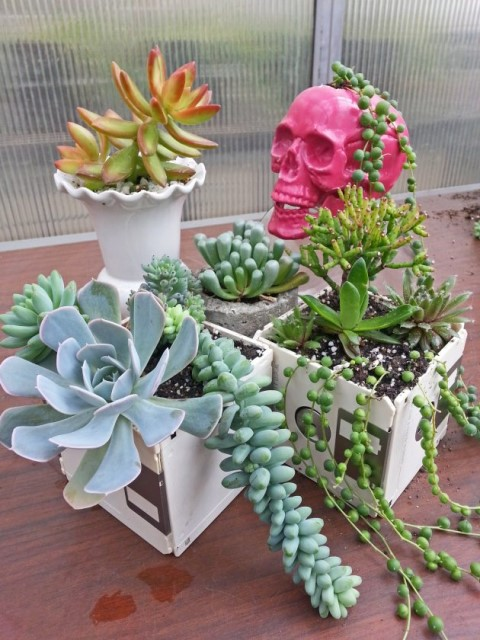 19 Ideas potted plants (13)