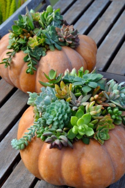 19 Ideas potted plants (16)