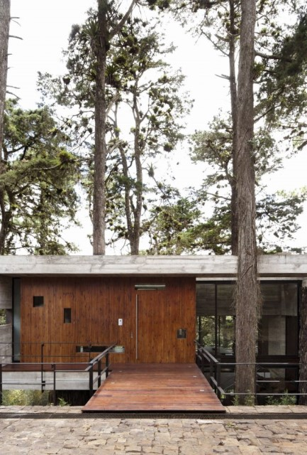 concrete-home-forest-side (19)
