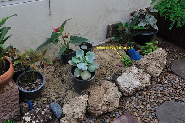 vertical garden review (26)
