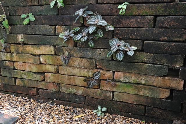 vertical garden review (57)