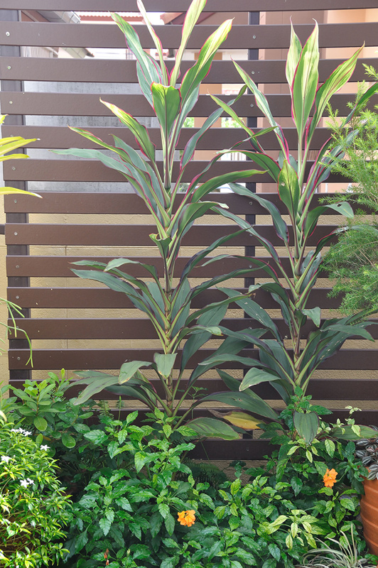 vertical garden review (59)