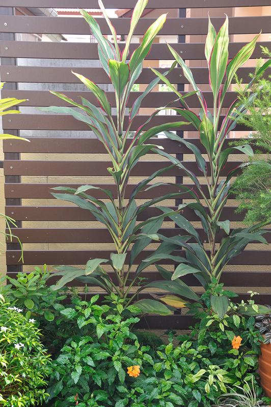 vertical garden review (59)