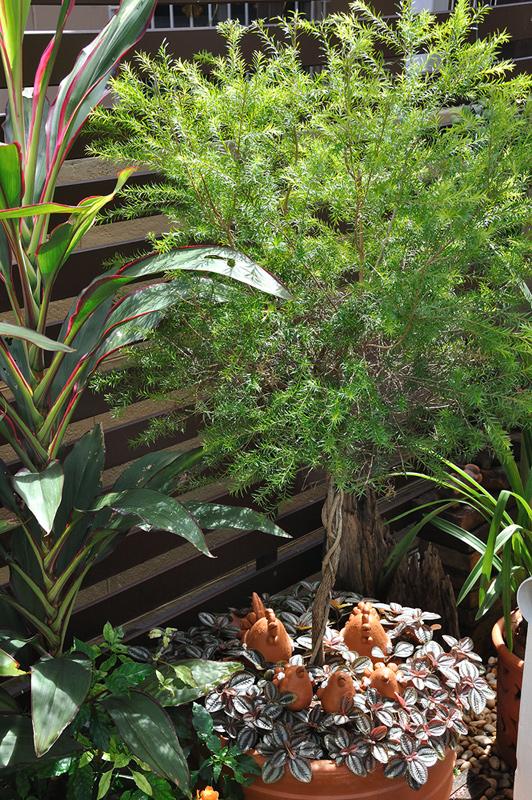 vertical garden review (61)
