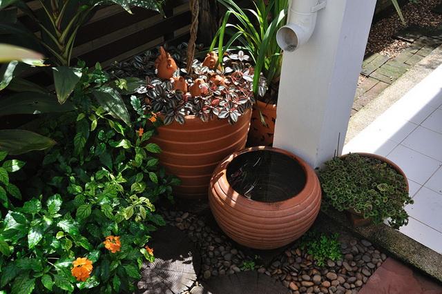 vertical garden review (63)