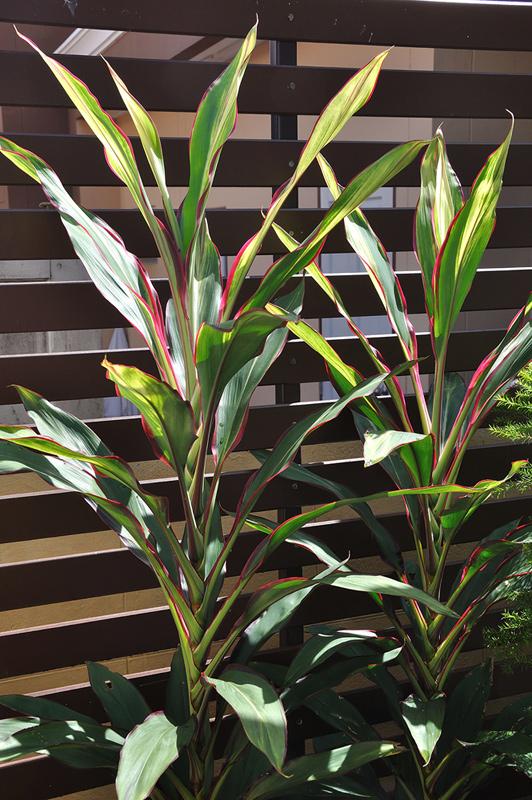 vertical garden review (68)