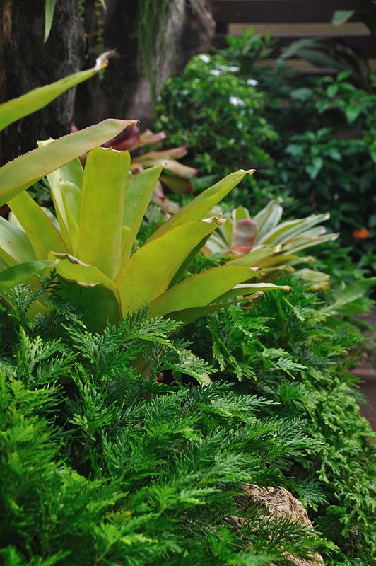 vertical garden review (69)