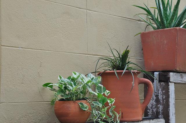 vertical garden review (8)