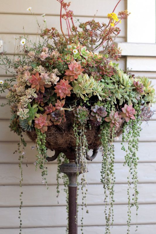 35 Ideas hanging Garden (36)