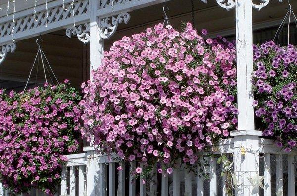 35 Ideas hanging Garden (5)