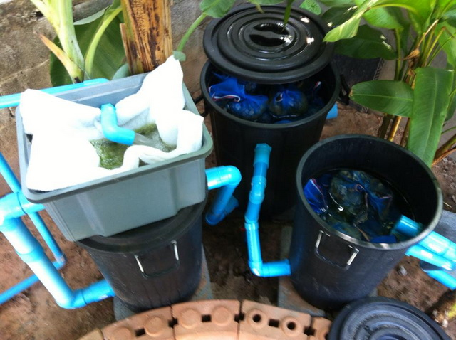 long fish pond diy review (39)