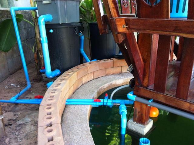long fish pond diy review (45)