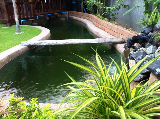 long fish pond diy review (48)