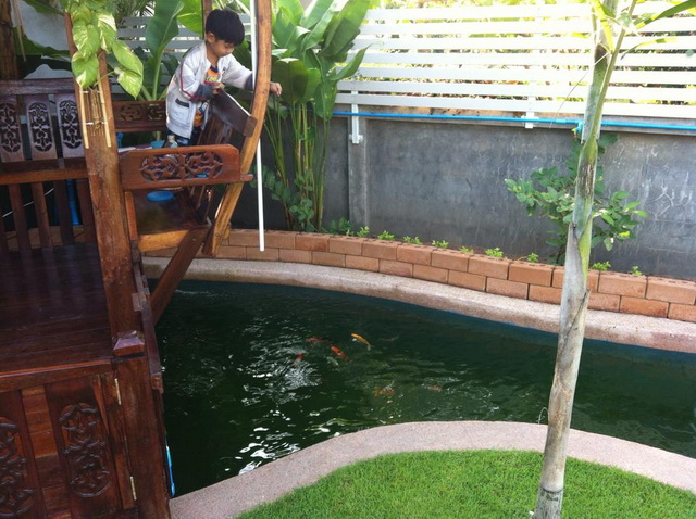 long fish pond diy review (52)