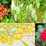 แนะนำ 10 ต้นไม้มงคลสำหรับปลูกหน้าบ้าน ความหมายดี ช่วยเสริมโชคลาภให้กับคนในบ้าน