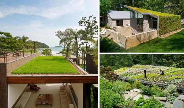 10-living-green-roof-plants-26