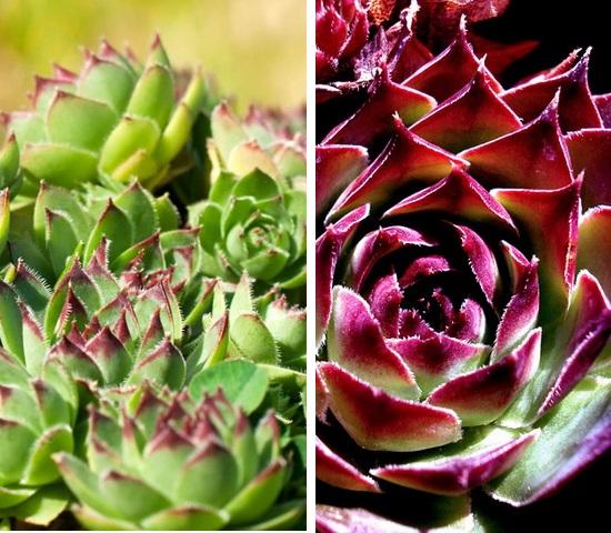 10-living-green-roof-plants-77
