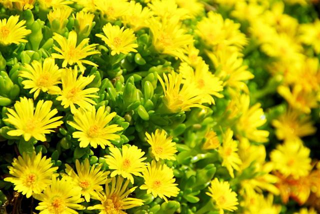 10-living-green-roof-plants-9