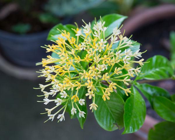 10-outdoor-flowers-for-gardening-10