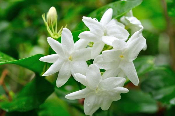 10-outdoor-flowers-for-gardening-2
