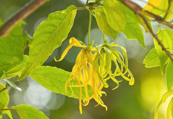 10-outdoor-flowers-for-gardening-4