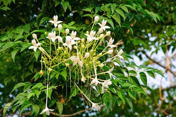 10-outdoor-flowers-for-gardening-5