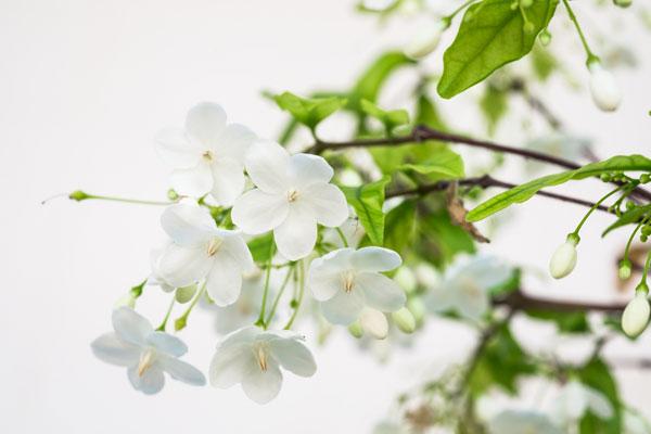 10-outdoor-flowers-for-gardening-6