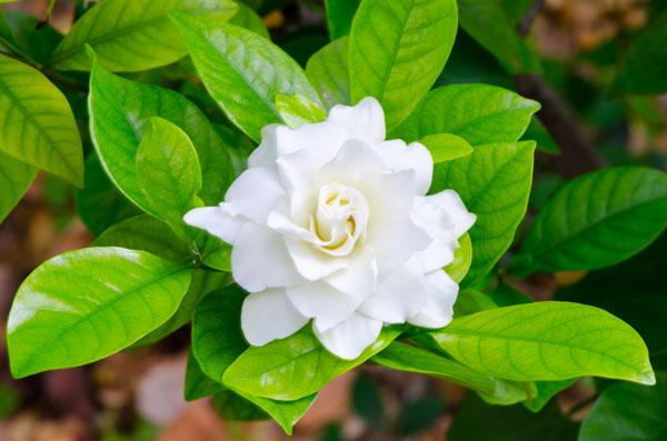 10-outdoor-flowers-for-gardening-7