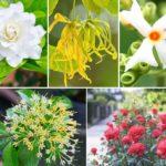 แนะนำ 10 ดอกไม้จัดสวนกลางแจ้ง กลิ่นหอมฟุ้ง หอมสดชื่นทั้งวัน