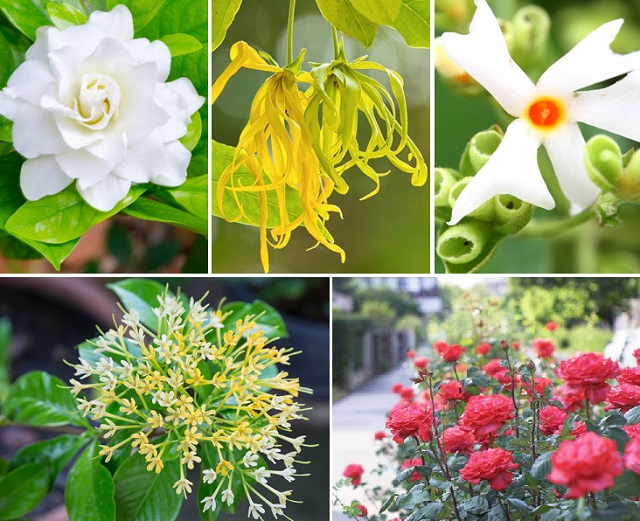 10-outdoor-flowers-for-gardening-cover