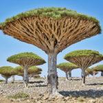 พาไปชม 10 ต้นไม้มหัศจรรย์ รูปทรงสุดแปลกตา ราวกับว่าหลุดมาจากในจินตนาการ!!