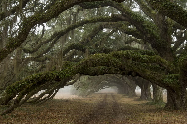 10-very-unique-trees-on-the-world-6