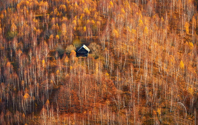 45 cozy-cabins-in-the-woods (27)