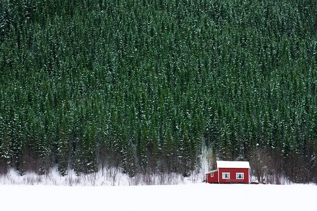 45 cozy-cabins-in-the-woods (32)