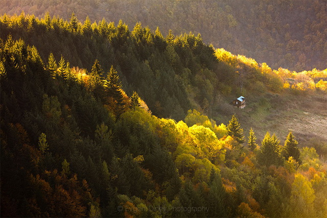 45 cozy-cabins-in-the-woods (37)