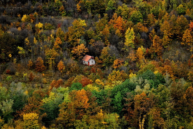 45 cozy-cabins-in-the-woods (9)