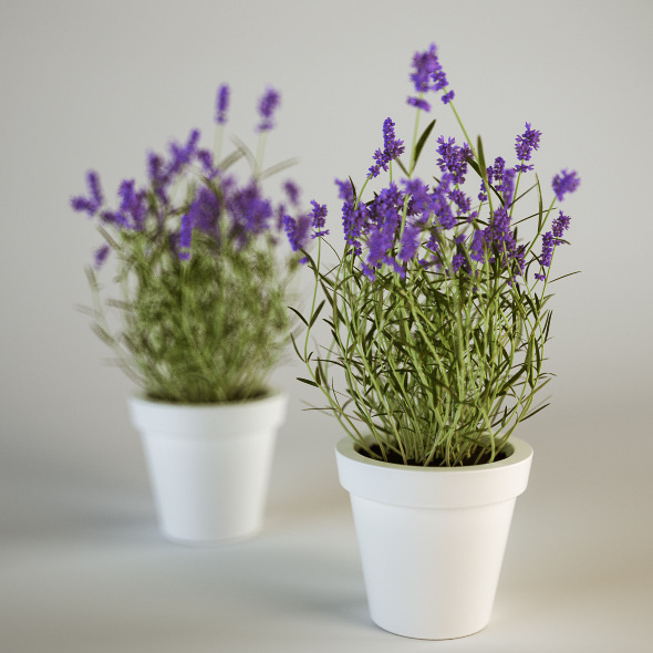 7-plants-that-give-positive-power-to-your-house-3