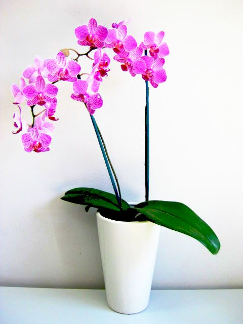 7-plants-that-give-positive-power-to-your-house-5