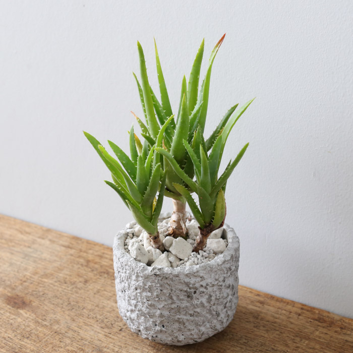 7-plants-that-give-positive-power-to-your-house-7