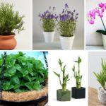 แนะนำ พืช 7 ชนิด ที่จะช่วยดึงพลังงานด้านบวกเข้าสู่บ้าน ให้สุขภาพแข็งแรงทั้งร่างกายและจิตใจ
