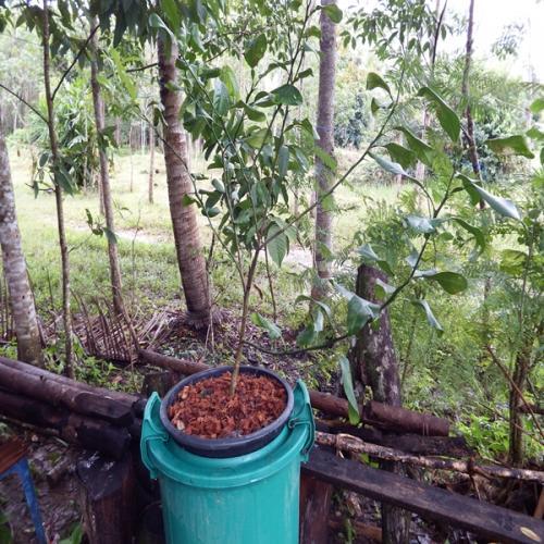 9 ways to grow lime (4)