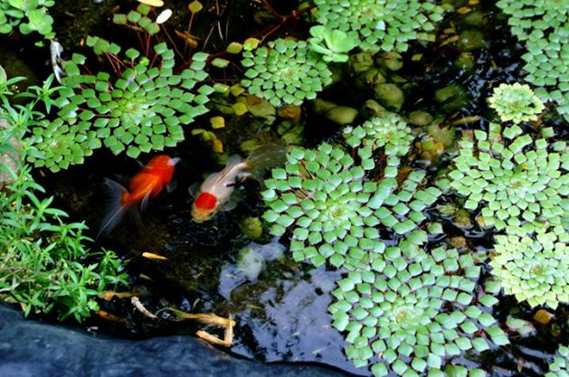 gorgeous-waterfall-fish-pond-review-21