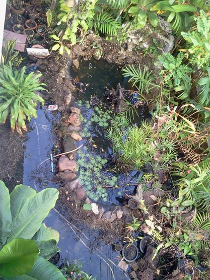 gorgeous-waterfall-fish-pond-review-23