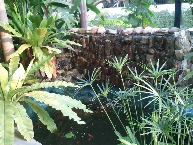 gorgeous-waterfall-fish-pond-review-39