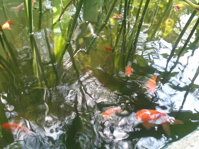gorgeous-waterfall-fish-pond-review-41