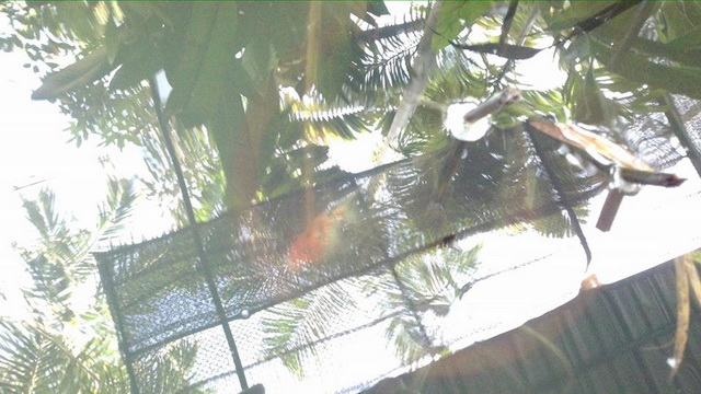 gorgeous-waterfall-fish-pond-review-48